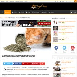 What Is Catnip And How Does It Affect Your Cat?