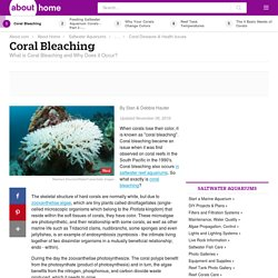 What is Coral Bleaching, and Why Does it Occur?