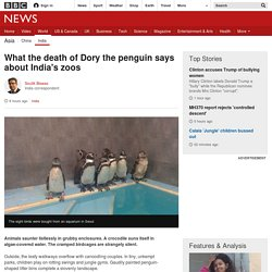 What the death of Dory the penguin says about India's zoos