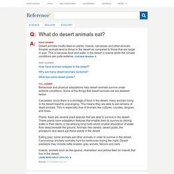 What do desert animals eat?