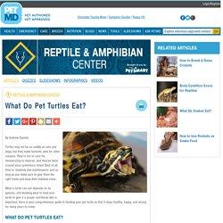 What Do Pet Turtles Eat?