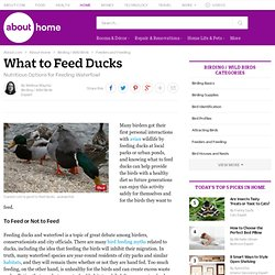 What to Feed Ducks (Nutritious Options & Tips)