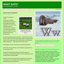 What Eats Grass?