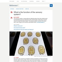 What is the function of the sensory system?