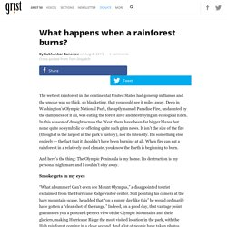 What happens when a rainforest burns?