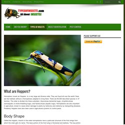 What are Hoppers? - Types Of Insects