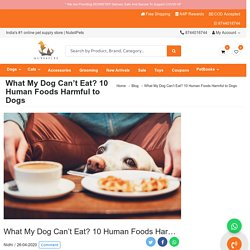What My Dog Can't Eat? 10 Human Foods Harmful to Dogs