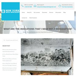 What are the Indications that I Need Mold Remediation?