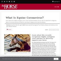 THE HORSE 07/01/20 What Is Equine Coronavirus?