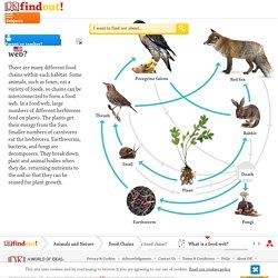 Food Webs For Kids