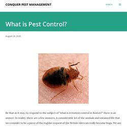 Professionals Can Take Care of Your Bed Bug ProblemQuickly