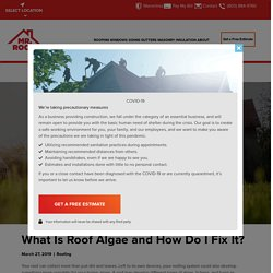 What Is Roof Algae and How Do I Fix It? - Mr Roof