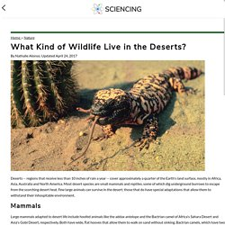 What Kind of Wildlife Live in the Deserts?