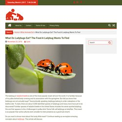 What Do Ladybugs Eat? The Food A Ladybug Wants To Find
