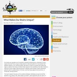 What Makes Our Brains Unique?