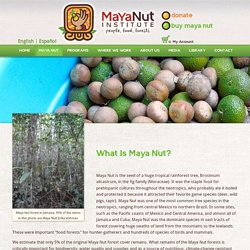 What is it? - Maya Nut Institute