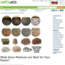 What Grow Mediums are Best for Your Plants?