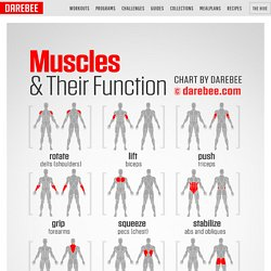 What muscles do and how to train them