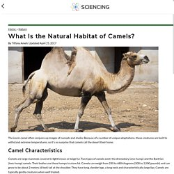 What Is the Natural Habitat of Camels?