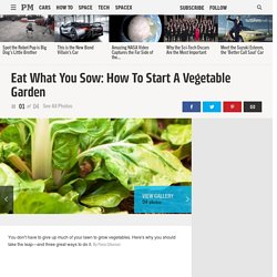 How to Start a Vegetable Garden - Vegetable Garden Plans
