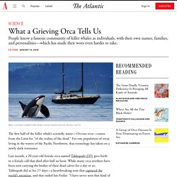 What the Grieving Orca Tells Us