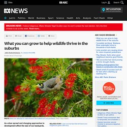 What you can grow to help wildlife thrive in the suburbs