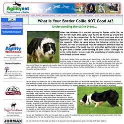 What is Your Border Collie NOT Good At?