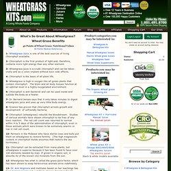 Wheatgrass Kits.com- 40 Benefits of Wheat Grass - Wheatgrass Facts