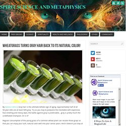 Wheatgrass Turns Gray Hair Back to Its Natural Color!
