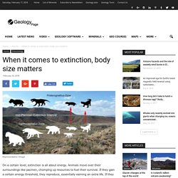 When it comes to extinction, body size matters