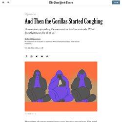 When Covid Spread to Gorillas