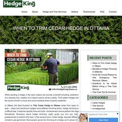 When to Trim Cedar Hedge in Ottawa - Hedge King