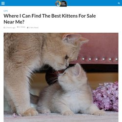 Where I Can Find The Best Kittens For Sale Near Me?