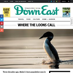 Where the Loons Call - Maine Loons - Down East Magazine
