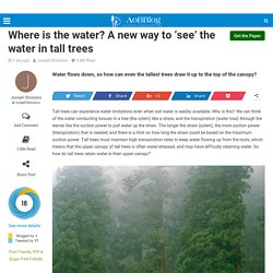 A new way to 'see' the water in tall trees