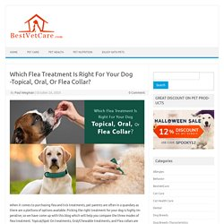 Which Flea Treatment Is Right For Your Dog -Topical, Oral, Or Flea Collar?