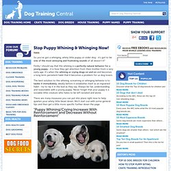 Stop Puppy Whining, Crying, Whinging or Screaming Fast! How To Stop Dog Whining