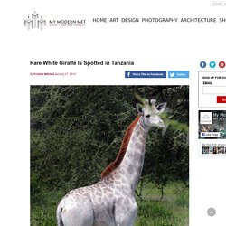 Rare White Giraffe Is Spotted in Tanzania