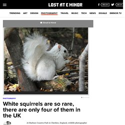 White squirrels are so rare, there are only four of them in the UK