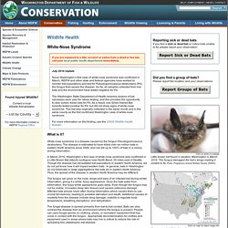 White Nose Syndrome of Bats Fact Sheet