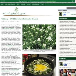 Whitetop—A Wild Invasive Substitute for Broccoli