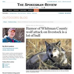 Rumor of Whitman County wolf attack on livestock is a lot of bull