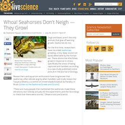 Whoa! Seahorses Don't Neigh — They Growl