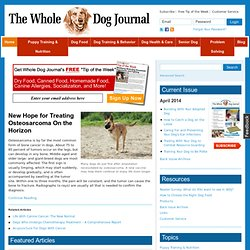 Whole Dog Journal is the monthly guide to natural dog care and training.
