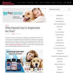 Why Dental Care is Important for You?