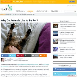 Why Do Animals Like To Be Pet?
