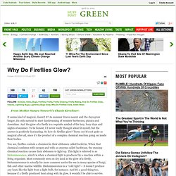 why do fireflies glow essay One is where a continuously glowing female attracts a non-glowing male  ( eisner, 1997) photuris fireflies do not produce lucibufagins and are left  defenseless.