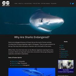 Why Sharks Are Endangered — SEEtheWILD Wildlife ...