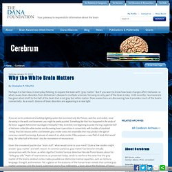 Why the White Brain Matters