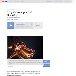 Why This Octopus Isn't Stuck-Up